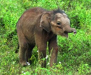 Logo Adopteer een weesolifantje