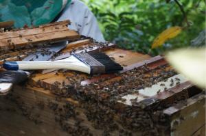 Logo Bijen voor Mulanje